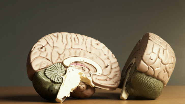 A brain split in two, since psychology is the study of the mind.